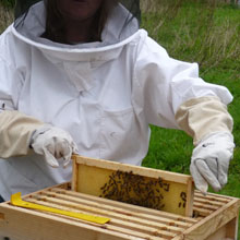 Fishers Farm bees
