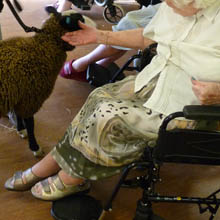 Fishers Mobile Farm visit to Beechville Care Home, Horwich